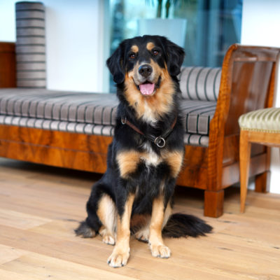 Hund von Pflegehilfe