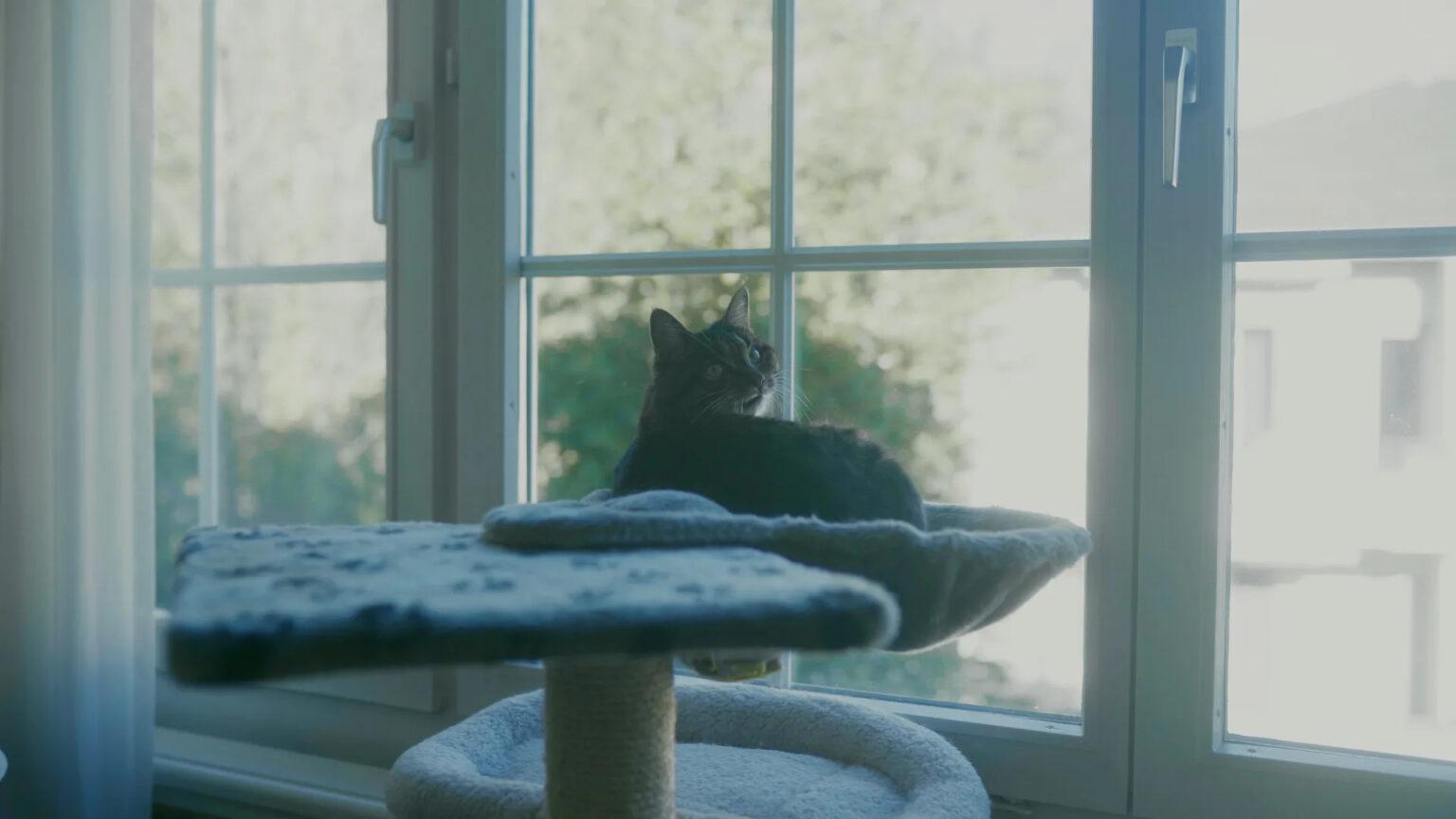 Katze beobachtet spezialisierte Spitex Palliativcare